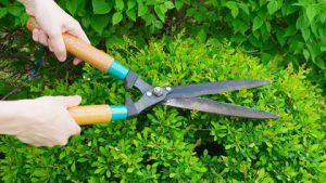 mantenimiento-mantenimiento-de-jardines